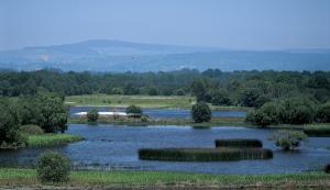 Lagoa de Cospeito