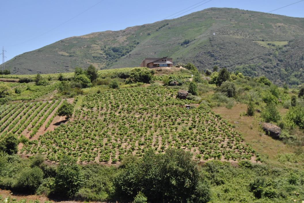 Festa do Viño de Valdeorras