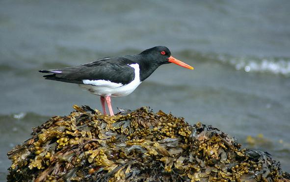 Bird watching in Galicia