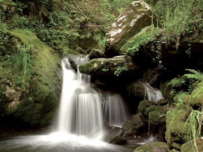 Galician Woodlands